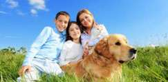 Pet Friendly Holiday Homes Ireland